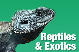 Products for reptiles and exotic pets